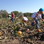 Field Trip Picking Pumpkin 1