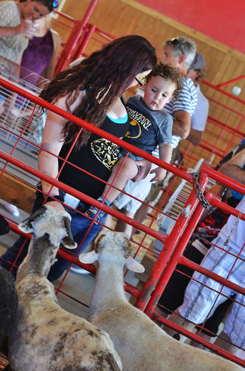 petting farm near Kansas City at Faulkner's Ranch