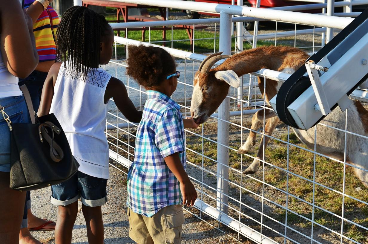 goats at Faulkner's Ranch