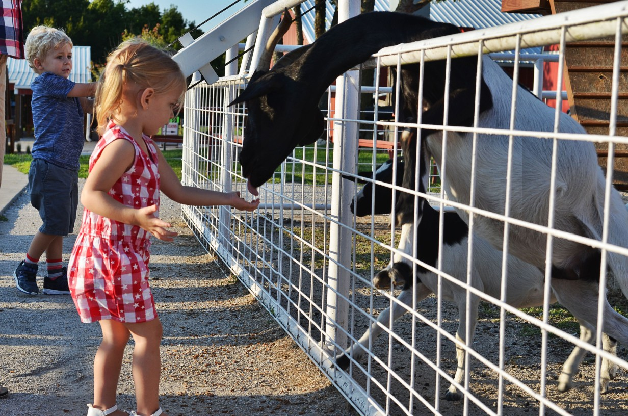 child and goat at petting farm at Faulkner's Ranch in Kansas City